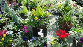 Image of Ready make baskets and planters for that perfect gift, and as a treat