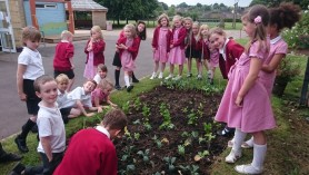 Butterflies class in Winsley C of E Primary School July 2016 with their new vegetable plot