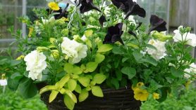 hanging-baskets-at-Downside