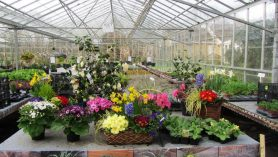 Floral Gifts for Mothering Sunday