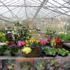 Plants for Mothering Sunday