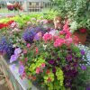Hanging-Baskets-at-Downside-